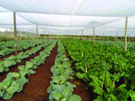 Shade netting for the vegetables crops